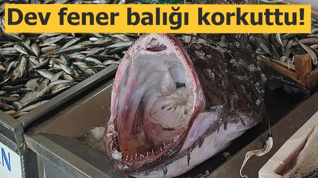 Marmara'dan çıkan dev fener balığı korkuttu