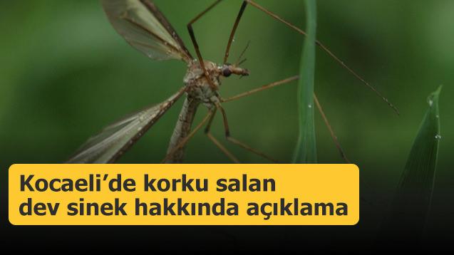 Kocaeli'de korku salan dev sinek hakkında açıklama