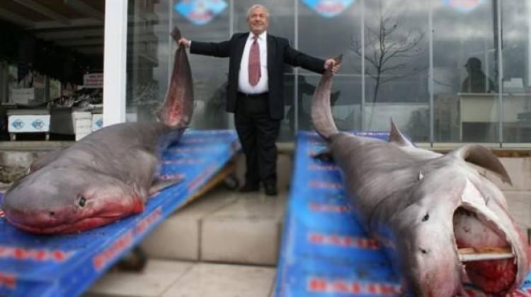 Türkiye'de köpekbalığı avcılığı yasaklandı