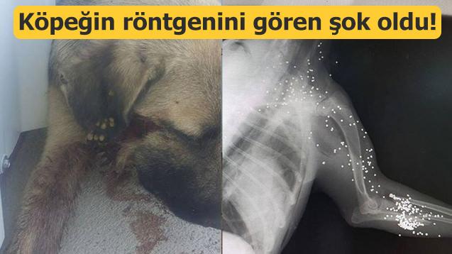 Köpeğin röntgenini gören şok oldu!