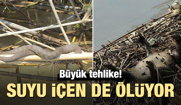 Büyük Menderes'te tüm canlılar tehlikede!