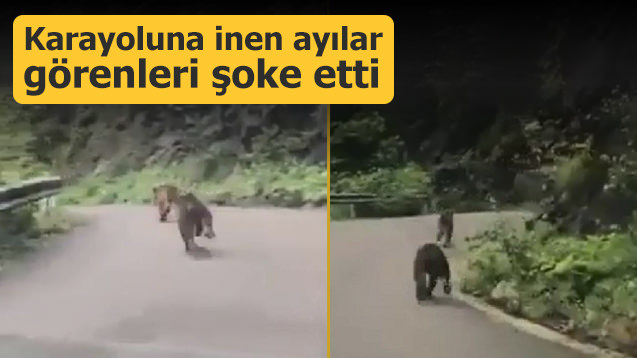 Karayoluna inen ayılar görenleri şoke etti