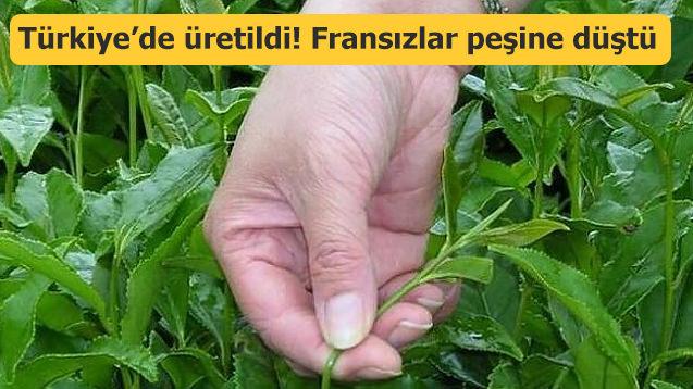 İlk kez Türkiye'de üretildi! Fransızlar peşinde...