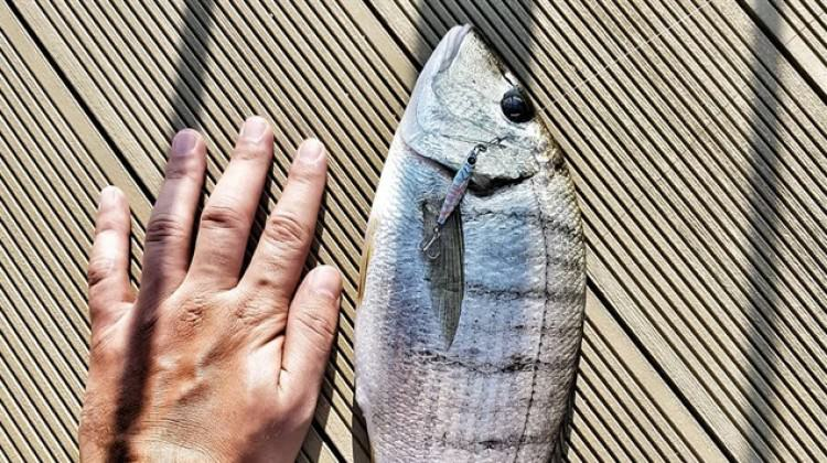 Tüm dünyada aranan iki Türk balığı