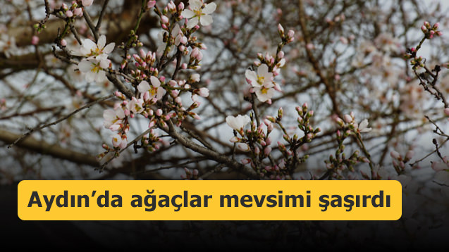 Aydın'da ağaçlar mevsimi şaşırdı