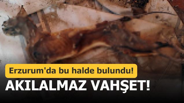 Erzurum'da bu halde bulundu! Akılalmaz vahşet