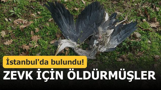 İstanbul'da bulundu! Zevk için öldürmüşler