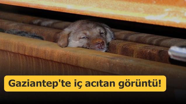 Gaziantep'te iç acıtan görüntü!