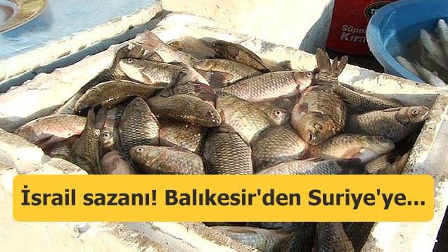 İsrail sazanı! Balıkesir'den Suriye'ye...