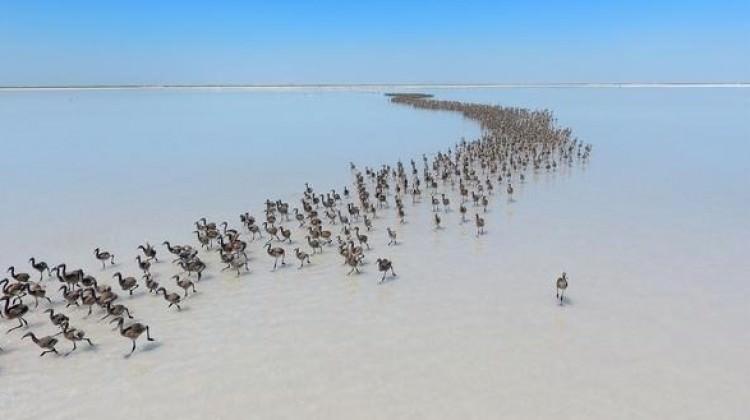 Tuz Gölü'ne büyük yatırım