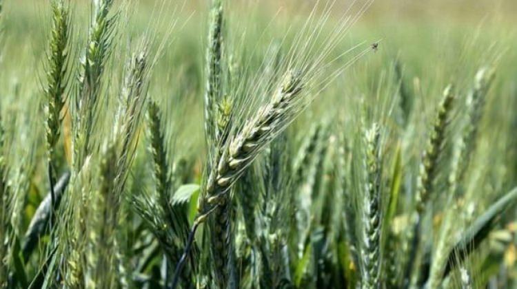 Türkiye ekonomik bitki türlerinin gen merkezi