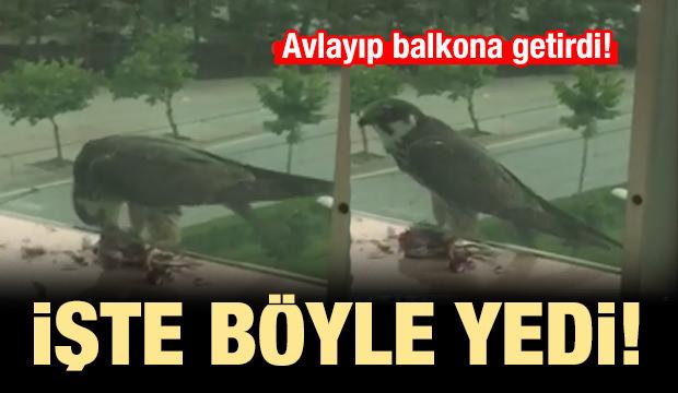 Yakaladığı güvercini balkona getirip böyle yedi!