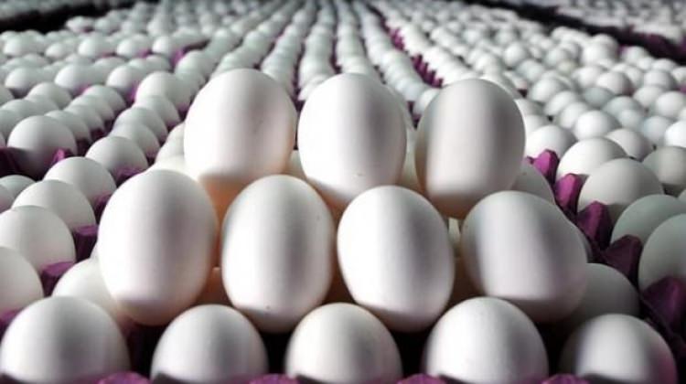 Yumurtanın fiyatı 22 kuruşa kadar düştü