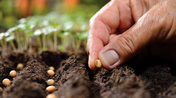 Tohumda 20 milyon dolar dış ticaret fazlası