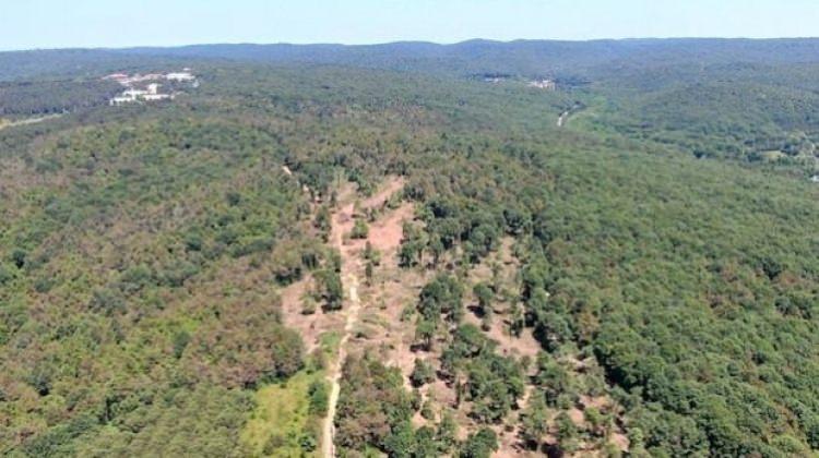 Ağaç katliamı iddialarına bakanlıktan yalanlama