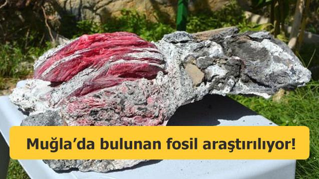 Aslan yavrusunu emziren kadın! Muğla'daki fosil...