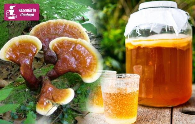 Kombucha çayı zayıflatır mı? Kilo verdiren kombu çayı nasıl yapılır?