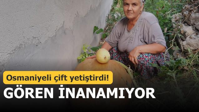 Osmaniyeli çift yetiştirdi! Gören inanamıyor
