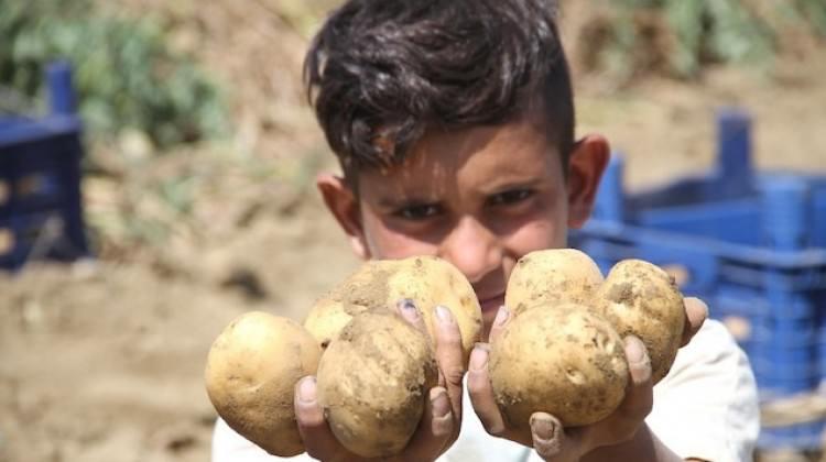 Patates fiyatıyla hüsrana uğrattı