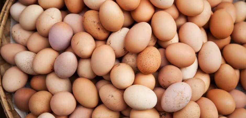 Yumurta ihracında yeni pazar heyecanı