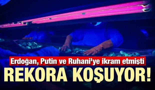 Erdoğan, Putin ve Ruhani'ye ikram etmişti: Rekora koşuyor