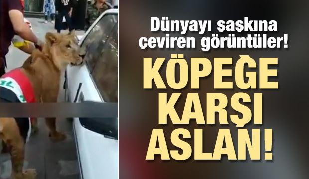 Dünyayı şaşkına çeviren görüntüler! Polis köpek getirince...