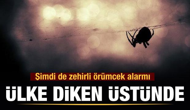 Ülke diken üstünde! Şimdi de zehirli örümcek alarmı... (23 Ocak 2020 Günün Önemli Gelişmeleri)