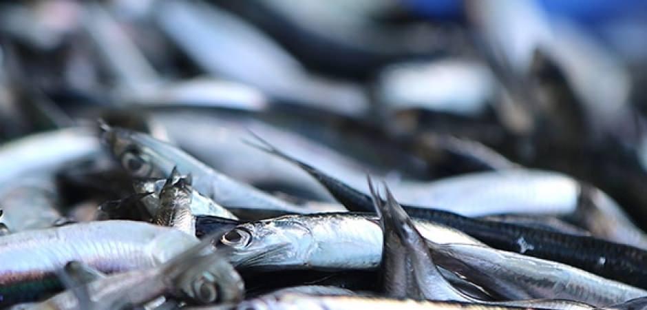 Korkutan açıklama: Böyle giderse balıkçılık biter